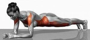 Gainage musculation