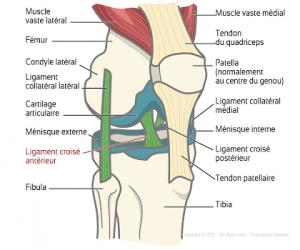 entorse ligament genou